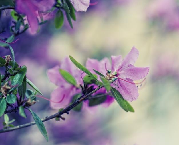 Prachtige paarse bloemen in de tuin Premium Foto
