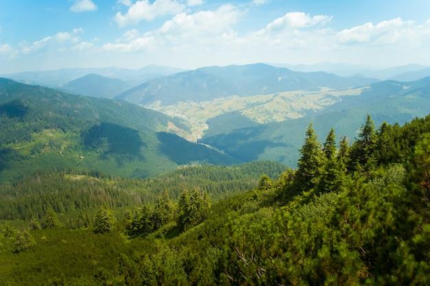 Prachtige pijnbomen op bergen Gratis Foto
