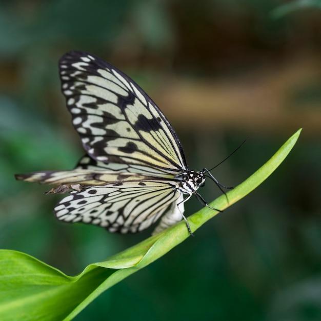 Prachtige vlinder in natuurlijke habitat Gratis Foto