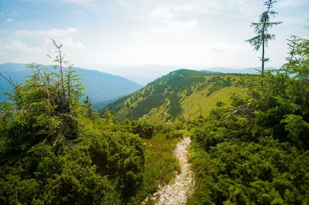 Prachtige weiden op bergen Gratis Foto