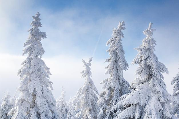 Prachtige winterlandschap met sneeuw bedekte bomen. Premium Foto