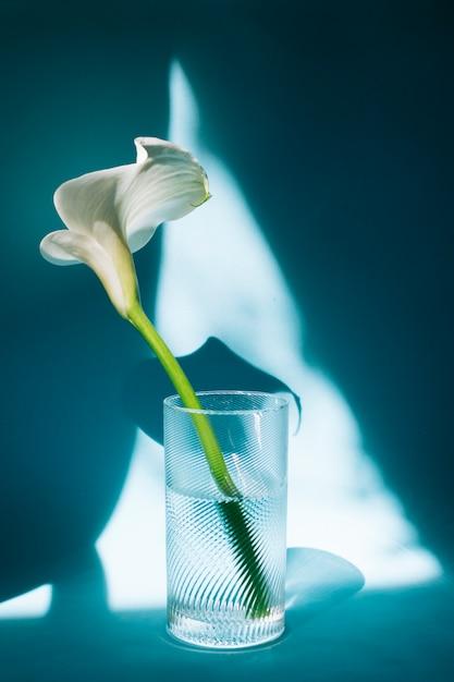 Prachtige witte bloem in glas met water Gratis Foto