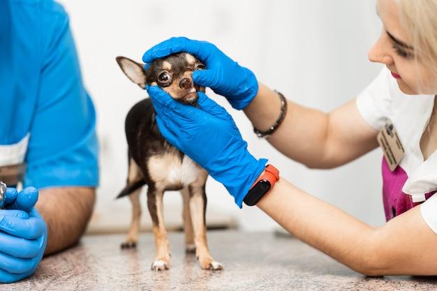 Professioneel veterinair onderzoek van de tanden van een hond. gezondheid van huisdieren Premium Foto