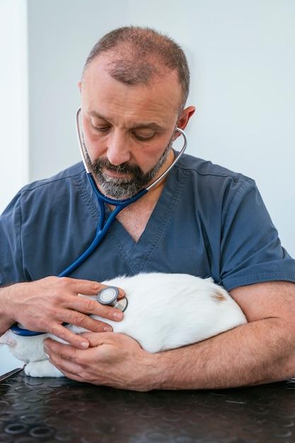 Professionele dierenarts die een volledig onderzoek doet aan een zieke kat. levensstijl met dieren. binnenshuis witte kliniek. Premium Foto