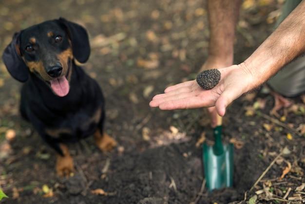 Professionele paddenstoelenjager en zijn getrainde hond vonden truffelpaddestoelen in het bos Gratis Foto