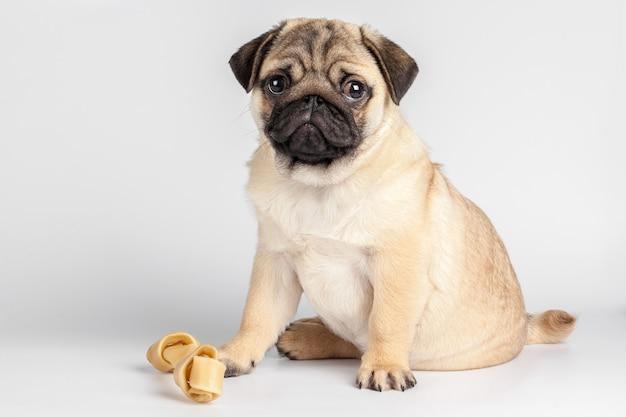 Pug hond op een witte achtergrond wordt geïsoleerd die Premium Foto