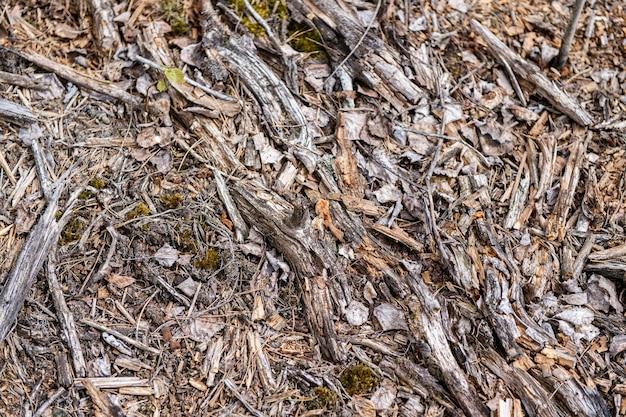 Puinhoop van droge houten splinters buiten op de grond Premium Foto