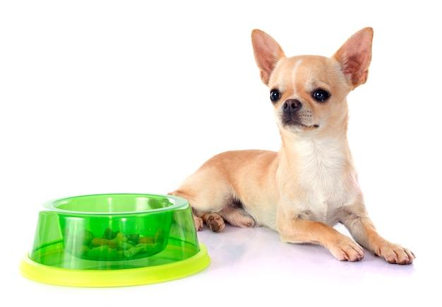 Puppy chihuahua Premium Foto