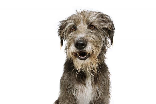 Puppy dat van de portret het gelukkige herdershond kant kijkt. Premium Foto