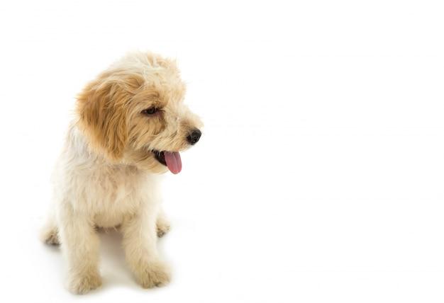 Puppy hond geïsoleerd op een witte achtergrond Gratis Foto