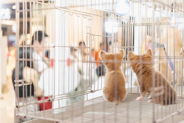 Puppy in een kooi voor het verkopen in de huisdierenmarkt, mensen die huisdieren van huisdierenopslag kopen Premium Foto