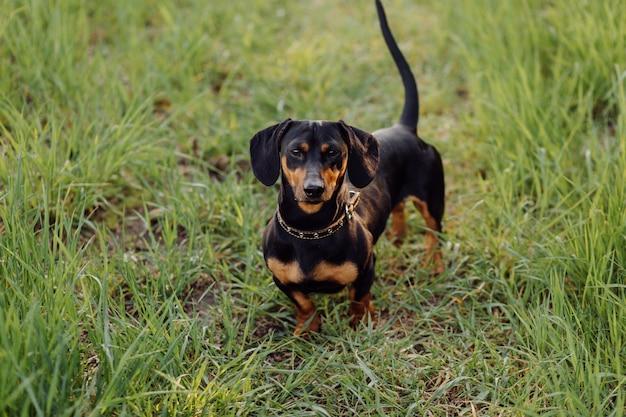 Puppy op het gras Gratis Foto