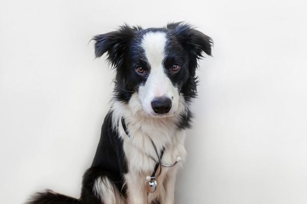 Puppyhond border collie met stethoscoop op witte achtergrond wordt geïsoleerd die Premium Foto