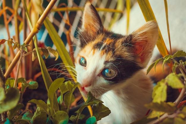 Puppykat op de gebloeide achtergrond van de balkonflat Premium Foto