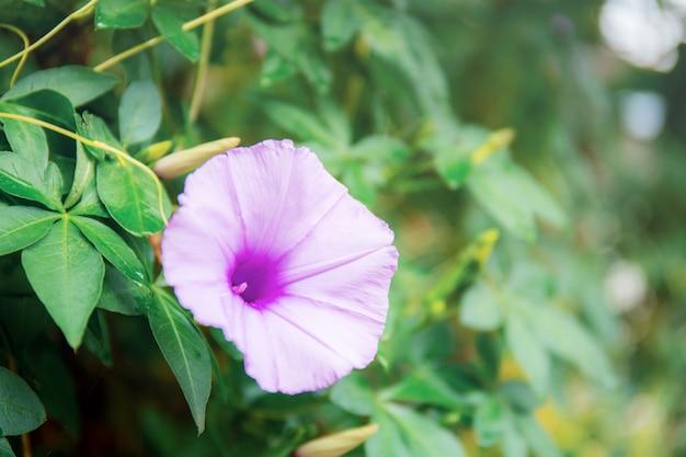 Purpere bloem in park. Premium Foto