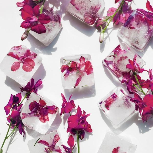 Purpere bloemen in ijsblokjes op witte achtergrond Gratis Foto