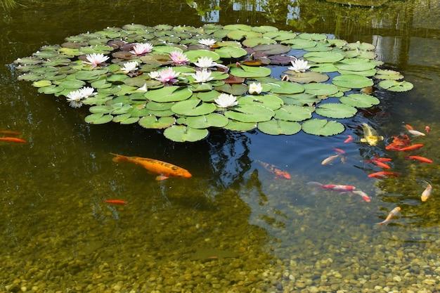 Vijver met bloemen en vissen foto gratis download for Vissen vijver