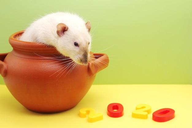 Rat in een kleipot en nieuwjaarscijfers 2020 Premium Foto