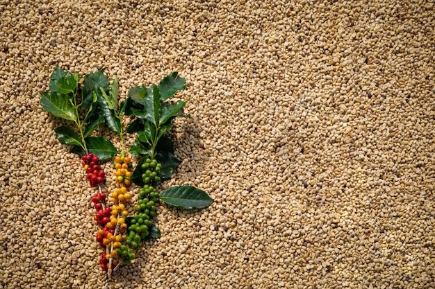 Rauwe koffie met groene bladeren en gedroogde koffiebonen Premium Foto