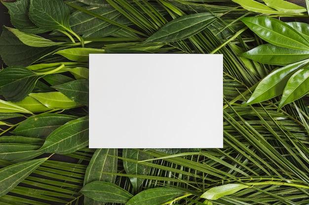 Rechthoekig wit kader over groene bladeren Gratis Foto