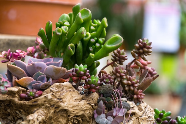 Rechthoekige Rangschikking Van Vetplanten Cactus