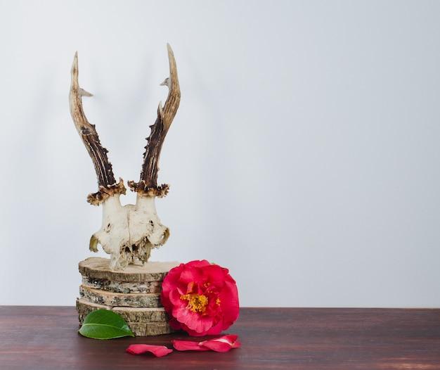 Reeën schedel met camelia's voor decoratie. Premium Foto