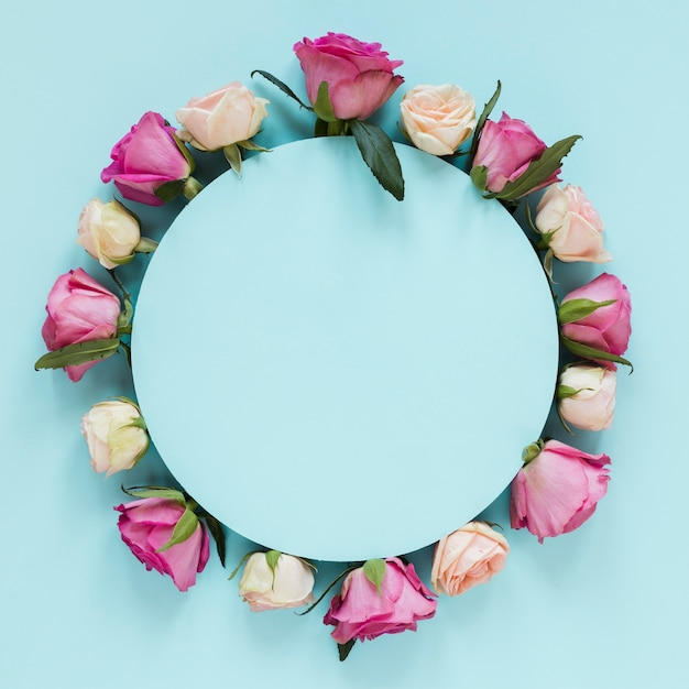 Regeling op gradiënt roze en witte rozen met blauwe achtergrond Premium Foto