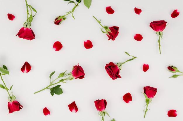 Regeling van eenvoudige rode rozen Gratis Foto
