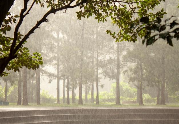 Regenachtige dag op een park in brazilië. regen over de bomen. Premium Foto