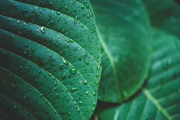Regenwater op een groene bladmacro. Gratis Foto