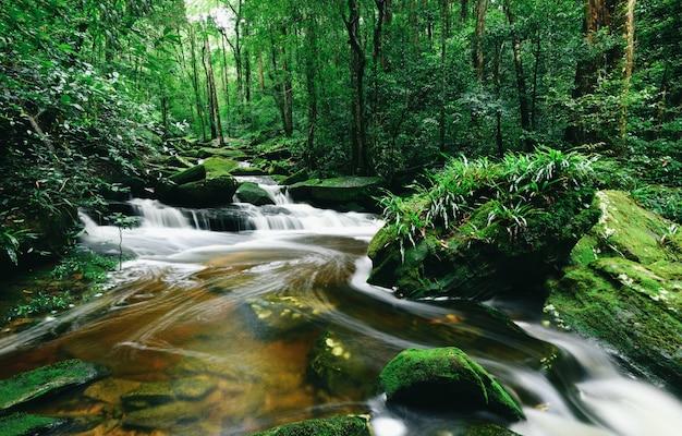 Regenwoudwildernis met rots en groene mos in het ochtend wilde tropische bos Premium Foto