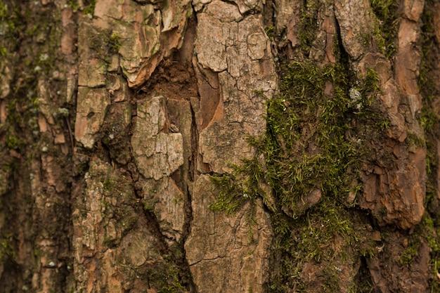 Reliëfstructuur van de bruine bast van een boom met groen mos en korstmos erop. uitgebreid cirkelvormig panorama van de schors van een eik Premium Foto