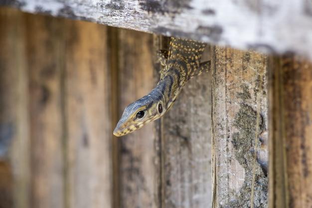 Reptiel kruipen door gat in hek Gratis Foto