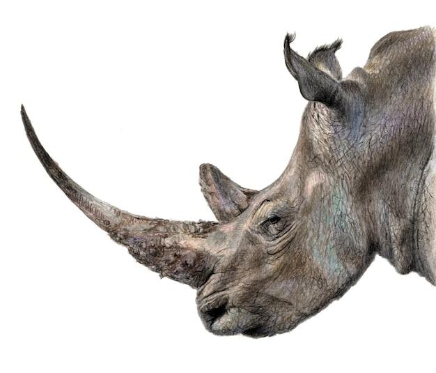 Rhino profiel. potlood kleur illustratie geïsoleerd op een witte achtergrond. realistische tekening Premium Foto