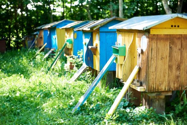 Rij van bijenkorven in een bijenstal in openlucht in de van de de zomerlente van de tuinaard de seizoengebonden bijenteelt het concept van de de hobbyhoning van de de landbouwberoep. Gratis Foto