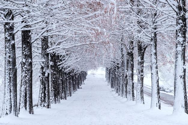 Rij van bomen in de winter met vallende sneeuw Gratis Foto