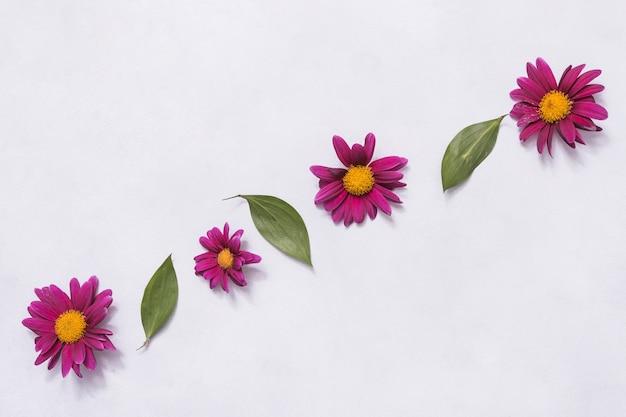 Rij van roze bloemen en groene bladeren Gratis Foto