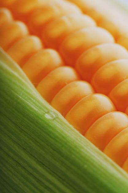 Rijen verse en rijpe gele maïskorrels Premium Foto