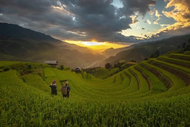 Rijstterrassen in de ochtend van het oogstseizoen in het noorden van mu cang chai, yenbai, vietnam. Premium Foto