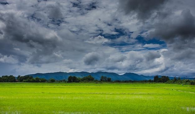 Rijstvelden onder de bewolkte hemel Premium Foto