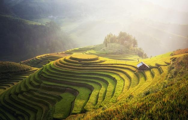 Rijstvelden op terrassen van mu cang chai, yenbai, vietnam. landschappen van vietnam. Premium Foto