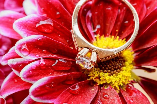 Ringen roze dahlia's houden van valentijnsdag getint en verzacht - diamanten bruiloft Premium Foto