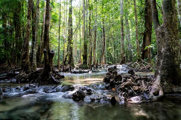 Rivier diep in bergbos. samenstelling van de natuur Premium Foto