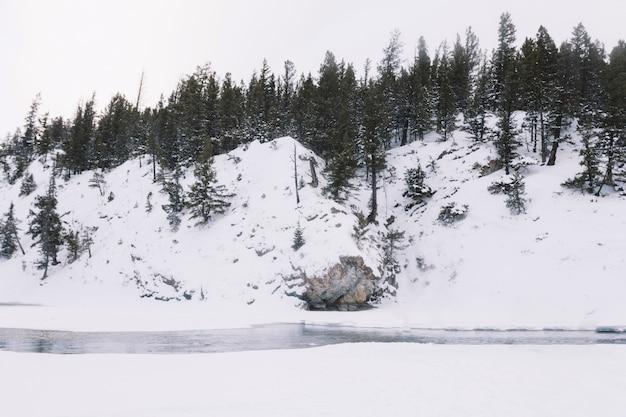 Rivier in besneeuwde bossen Gratis Foto