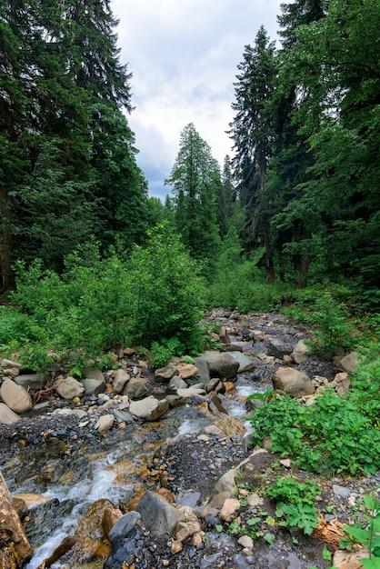 Rivier in de bergen Premium Foto