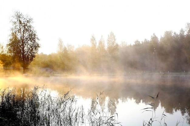 Rivier op natuur landschap Gratis Foto