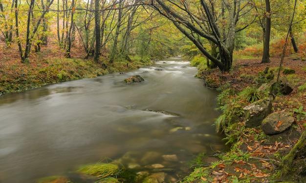 Rivier tamuxe in galicië. natuurlijk landschap Premium Foto