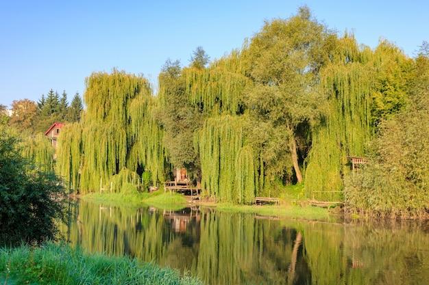 Rivieroever begroeid met hoge oude wilgen in zonnige herfstochtend. rivierlandschap Premium Foto