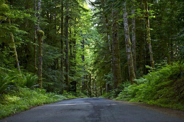 Road through deep forest Gratis Foto