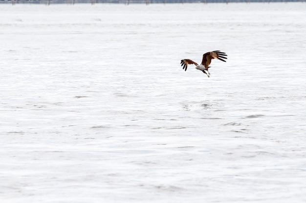Rode adelaarsvlieg op het overzees in aard in thailand Premium Foto